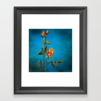 Tahitian Sunset Rose Buds Framed Art Print