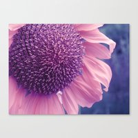 pastel sunflower Canvas Print