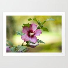 Hardy Hibiscus Art Print