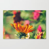 Sweet Flower Of Mine Canvas Print