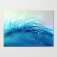 blue feather Canvas Print