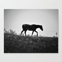 Horse with no name... Canvas Print