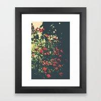 Summer Roses Series  - I… Framed Art Print