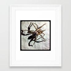 Spider. Framed Art Print