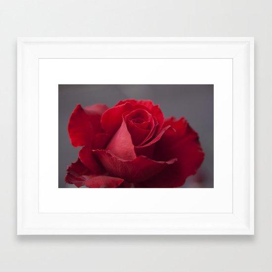 Lokelani loke'ula'ula Framed Art Print