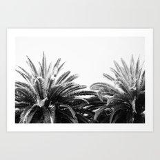 BW Palms  Art Print