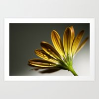 Simple Beauty. Art Print