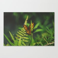 Butterfly, Bali Canvas Print