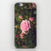 Sweet Summertime I iPhone & iPod Skin