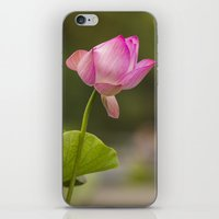 Bethesda Lily iPhone & iPod Skin