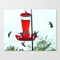Humming Birds migrating Canvas Print
