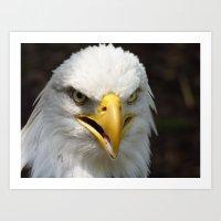Eagle 2015 Art Print