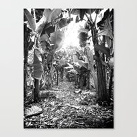 Canvas Print featuring Banana Walk by SmallIslandInTheSun