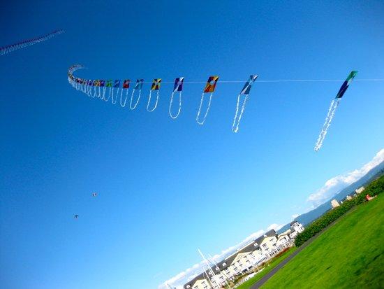 Kites Art Print