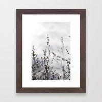 Grey Grasses Framed Art Print