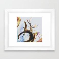 Insta Texas Trees Framed Art Print