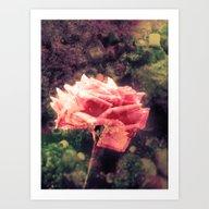 Mystery Rose Art Print