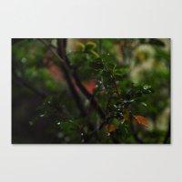 Rain // Leaves Canvas Print