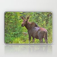 Angry Moose Laptop & iPad Skin