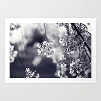 Weeping Cherry in Black and White Art Print