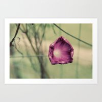 Curling In Purple Art Print