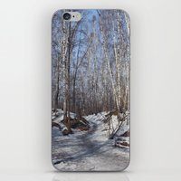 birch forest iPhone & iPod Skin