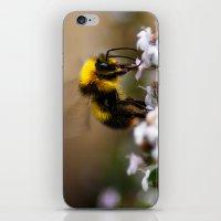 Buzzzzzzing Around iPhone & iPod Skin