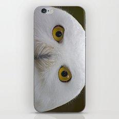 Snowy Owl iPhone & iPod Skin
