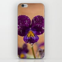 Flower after the Rain iPhone & iPod Skin