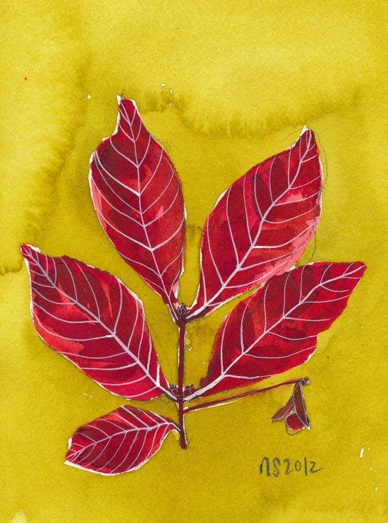 crandall park specimen no. 2 Art Print