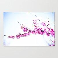 Spring has come 3 Canvas Print