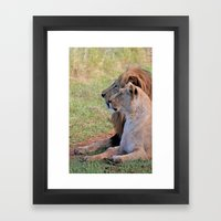 Lions Framed Art Print