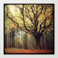 Hêtre de Ponthus 02 - Legendary Trees of Brocéliande Canvas Print