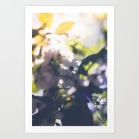 Contre-Jour Blooming Blossom Art Print