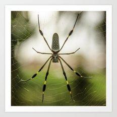 Autumn Spider Art Print