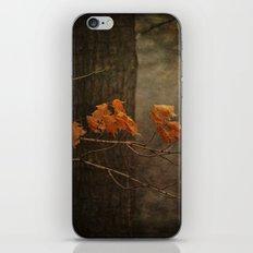 Late Autumn iPhone & iPod Skin