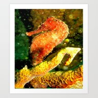 Red Seahorse Close-up Art Print