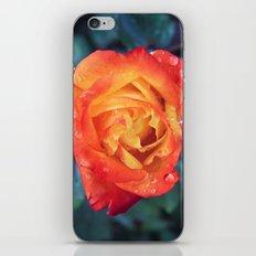 Multicolor Rose iPhone & iPod Skin