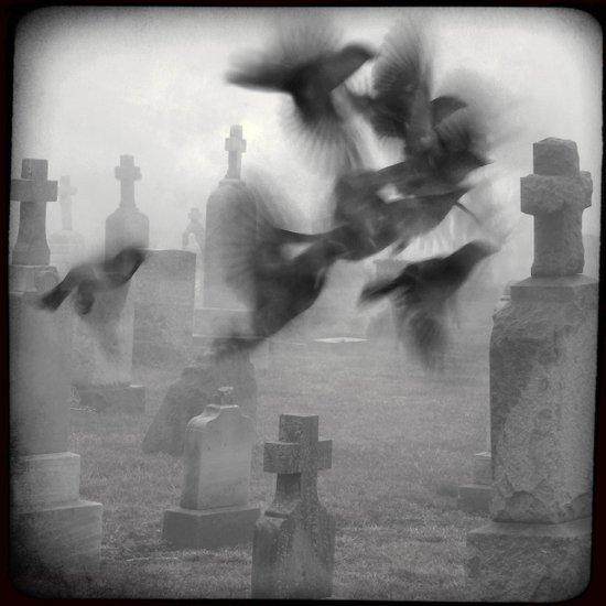 The Ghost Birds Art Print