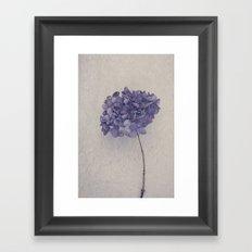 Dried Blue Hydrangea II Framed Art Print