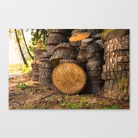 Wood pattern in the forest Canvas Print