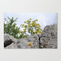 A yellow small tree Canvas Print