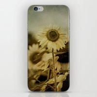 Sunny Field iPhone & iPod Skin