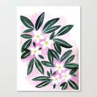 Jasmine Flower Canvas Print