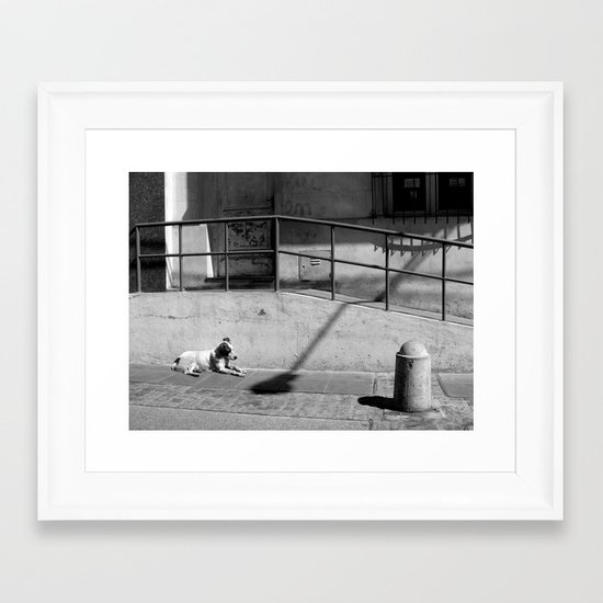 Stray Dog Framed Art Print