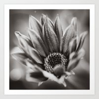 Flower In Black And Whit… Art Print