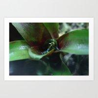 Poison Dart Frog Ranitom… Art Print