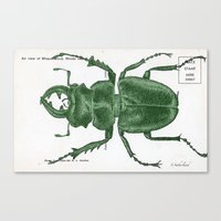 Green Beetle Postcard Canvas Print