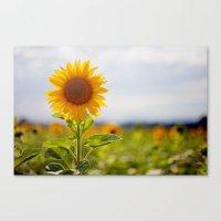 Sonnenblume Canvas Print