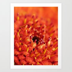 Orange Gerbera Art Print
